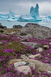 flowers-and-icebergs-helico_1367