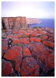 lichened_rocks_at_cape_pillar