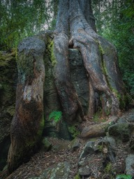 the-octopus-tree_1160
